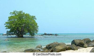 arbre, mer, exotique, mangrove, solitaire, peu profond, eau, mûrir