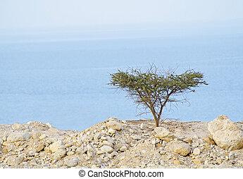 arbre, mer, mort