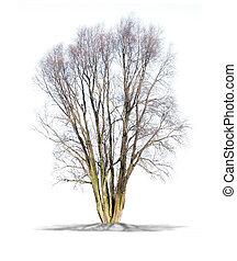 arbre mort, fond, isolé, haute resolution, blanc