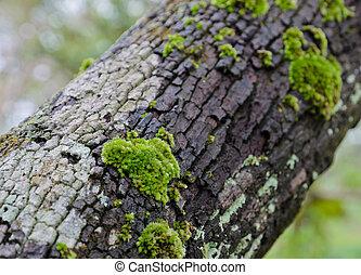 arbre, mousse, coffre