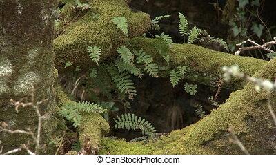 arbre, mousse, racines, fougères, couvert