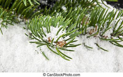 arbre, neige, branche