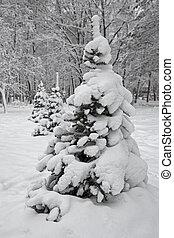 arbre, neige, sous