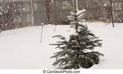 arbre, neigeux, hiver, sapin, parc