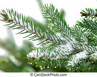 arbre noël, blanc, fond