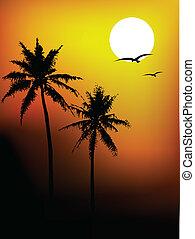 arbre, noix coco, silhouette, beauté