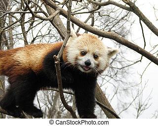 arbre, ours panda, rouges
