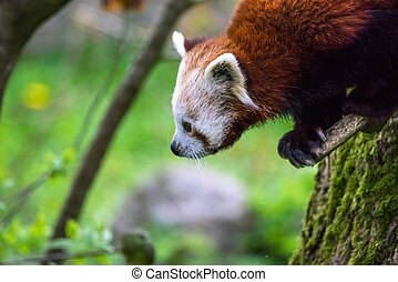 arbre, panda, rouges