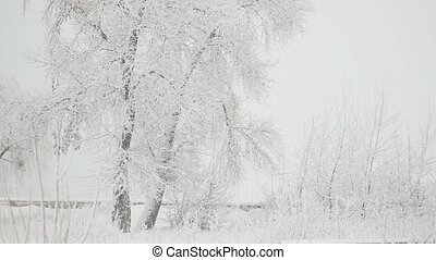 arbre, parc, hiver, chute neige