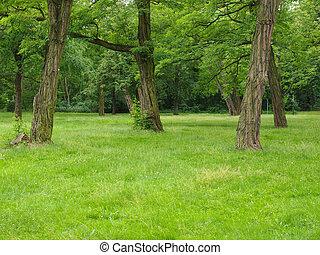 arbre, parc