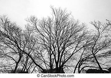 arbre, park., branches