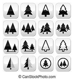 arbre pin, vecteur, boutons, ensemble