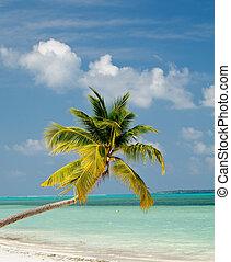 arbre, plage paume, océan