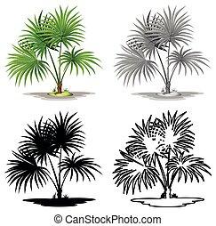 arbre, plante, ensemble, paume