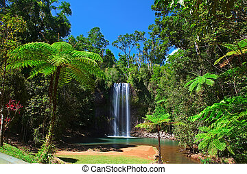 arbre, pluie, fougère, exotique, chute eau, forêt, paradis