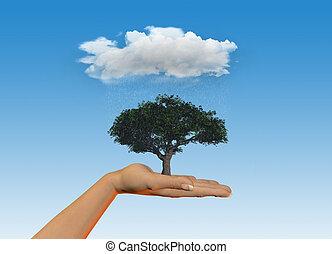 arbre, pluie, possession main, sous, nuage