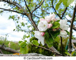 arbre, pomme, fleur