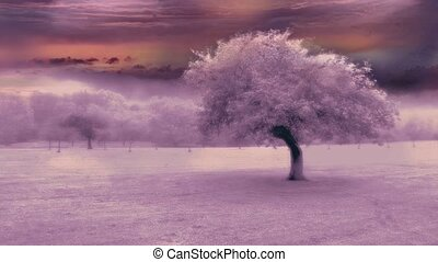 arbre, pourpre