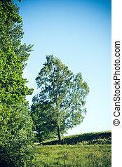 arbre, pré