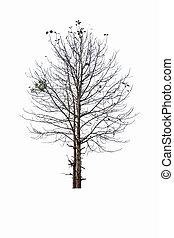 arbre, presque, mort