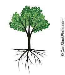 arbre, racines