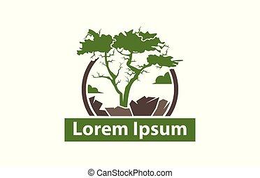 arbre, racines, rocher