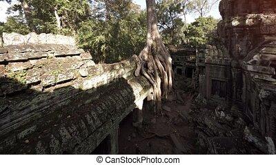 arbre, ruine, cambodgien, ancien, racines, pousser, temple, énorme