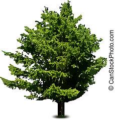 arbre sapin, isolé, pin, unique, vecteur, white.