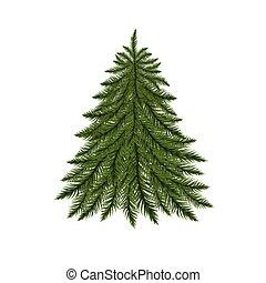 arbre sapin, isolé, white.