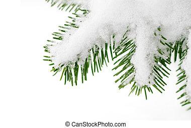 arbre sapin, neige, branche