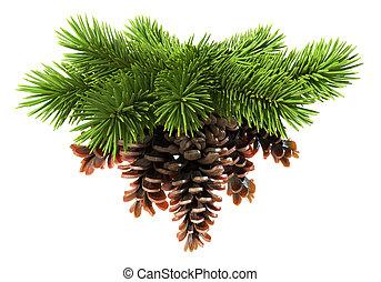 arbre sapin, pin-cônes