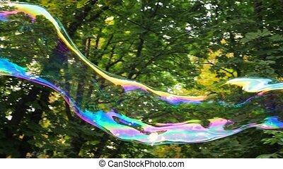 arbre., savon, radiant, coloré, contre, fregility, extérieur, arrière-plan., arbres, insouciant, vert, long, voler, grand, concept., blowed, air, légèreté, bulle, parc