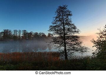 arbre, silhouette, brumeux, matin