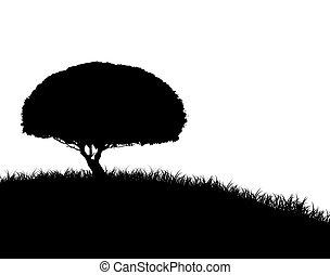 arbre, silhouette, colline, herbeux