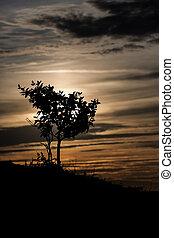 arbre, silhouette, coucher soleil