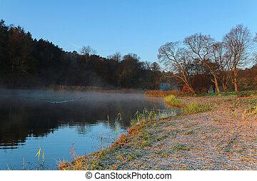 arbre, silhouette, lac, brumeux, matin