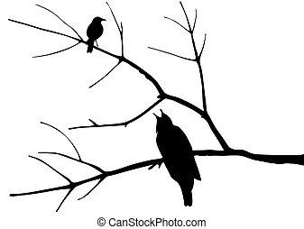 arbre, silhouette, oiseaux