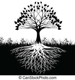 arbre, silhouette, racines