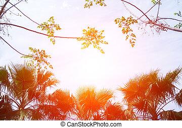 arbre, silhouettes, paume, coucher soleil, fond, orange