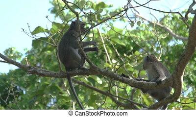 arbre, singes, séance