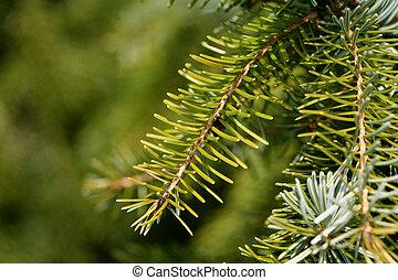 arbre soigné, closeup