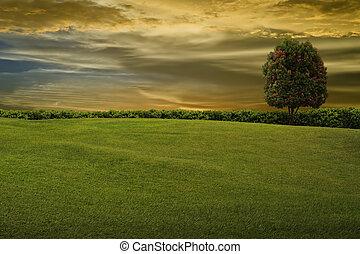 arbre, soir, ciel, herbe