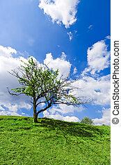 arbre, solitaire, bleu, ciel nuageux, sous