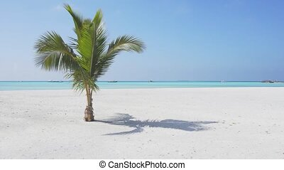 arbre, solitaire, croissant, paume, sable, blanc, maldives