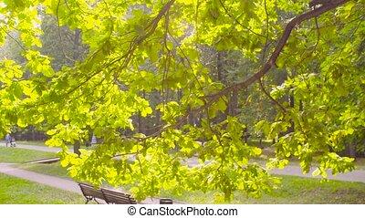 arbre, sous, garez banc