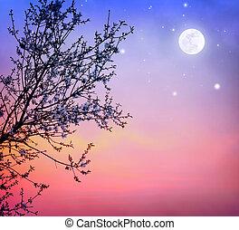 arbre, sur, fleurir, ciel, nuit