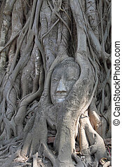 arbre, tête, bouddha, grès, racines