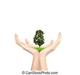 arbre, tenant mains