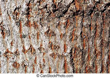 arbre, texture, pin
