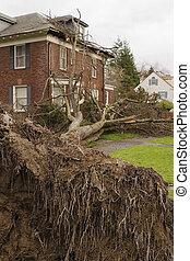 arbre tombé, maison